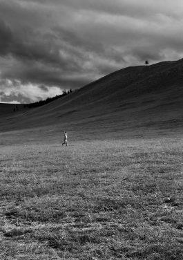 Il respiro della Mongolia